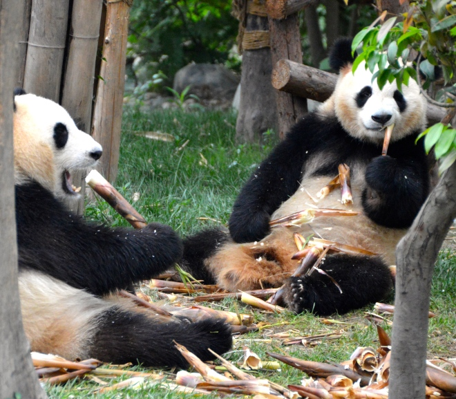 A bamboo feast.