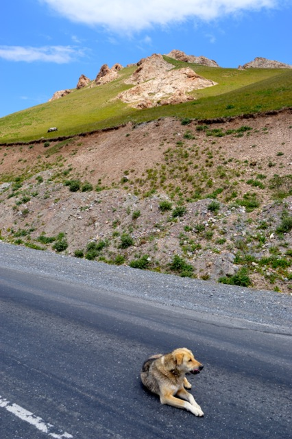 Our four legged friend taking a rest at the top of the pass.
