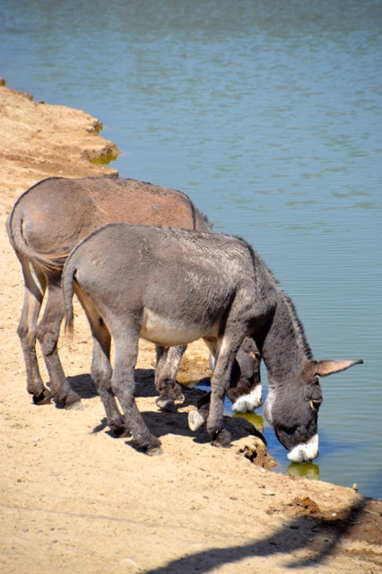 More donkey love.