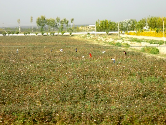 The cotton fields.