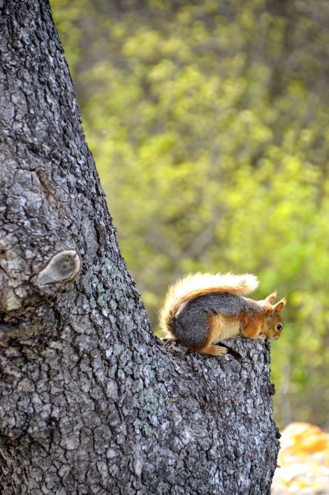 Our first squirrel sighting.