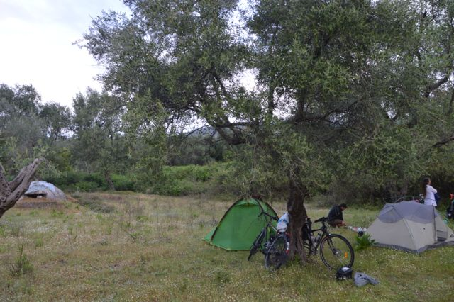 Camping under the olive trees in Himare.